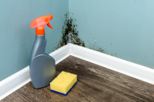 Spray bottle and sponge near black mould wall. House cleaning co