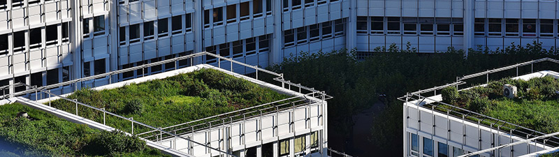 photo of green roof for Southwark planning page